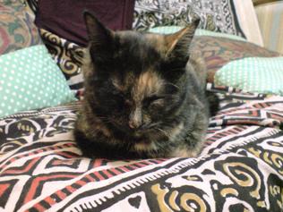 猫らしいポーズで寝るマノちゃん