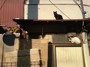 ひさしの上の猫