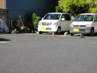 近所の猫たち