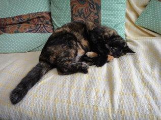 ソファーで丸くなるマノちゃん