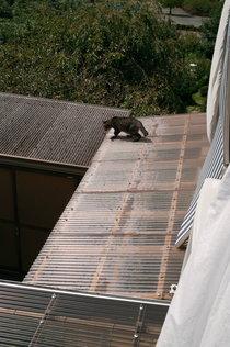 屋根に避難